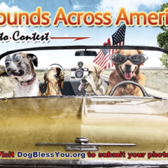 Explore Presents Dog Bless U.S.A.: Hounds Across America
